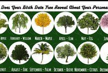 születési fád