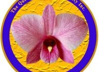 Queensland Orchid International / http://queenslandorchid.wordpress.com  ✿❀ Sharing the Joy and Knowledge of Growing Orchids ❀✿ Promoting diverse interchange of sciences, arts, ideas and cultures pertaining to orchids via dynamic, interactive formats with an international horizon.