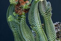 Plants and green stuff