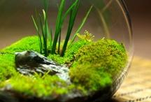 aquarium / Aquarium dan Aquascape