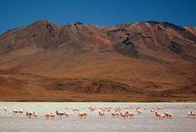 Bolivia Altiplano & Salar de Uyuni