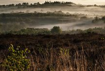 Ashdown Forest - my place on earth