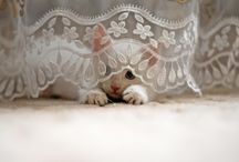 Adorable Animals <3 / whats not to love? / by Amberly Lowder