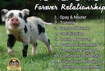 We Love Piggies, too!