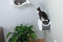 Katten dingen