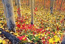 Autumn (by Emanuele Casale)