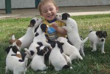 Jack Russell Terriers / by Patti Williams