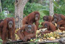fauna indonesia