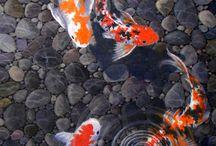 koi fish paintings realism