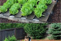 DIY veggie garden with kids