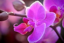 Orchid Colour Inspirations