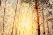 Amazing forest
