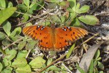 Butterflies and Moths / bugs / by Jill