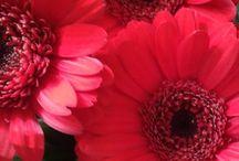Image fleur rouge
