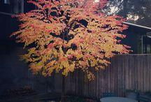 Garden_trees