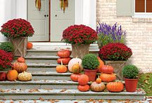 Potted Containers