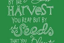 Seeds to sow