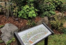 Ethnobotanical Garden / Washington Salish Native Plant Garden located in Tumwater Falls Park, Tumwater, Washington.