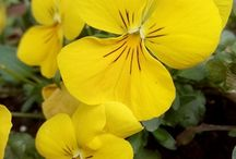 Fiori / Flowers