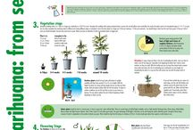 Weed Growing / Growing medical herbs