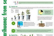 420 grow