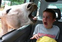 Perfectly Timed Photos / Photos taken just at the right time ... or wrong.  Which ever. :) / by Jaki Smith