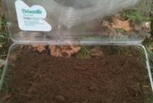Starting seeds / Germination