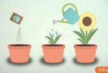 Как посадить цветы