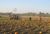 Tualatin Valley Pumpkin Patches / During the autumn months, the bucolic Washington County countryside takes on an ethereal glow, and October marks the time when farms throughout the region open the gates to a plethora of down-home fun.  Hayrides, pony rides, pumpkin bowling, corn mazes, pumpkin pickin' and more await at these area farms throughout the month of October.