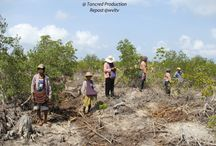 GREEN ECONOMY AND GREEN GROWTH / Read more https://wvltv.wordpress.com/2015/06/10/green-economy-and-green-growth-2/  ADOPT A MANGROVE  http://www.thorheyerdahlclimatepark.org/product/mangrove-tree/