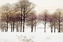 Nature 5: Snow / by Alisa Kensey