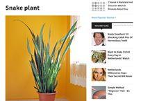 Toffe Planten