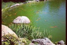 Summer - Japanese Gardens in US & Canada / Summer images from the over 300 Japanese gardens in North America, including member gardens of the North American Japanese Garden Association.