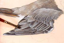 ptaki, pióra, skrzydła, ogony