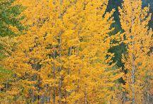 trees / by Brooke Buckner