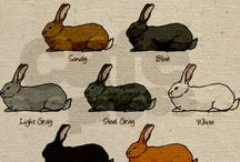 Rabbits / Rabbit facts,pictures and more  / by Ashley Schoonover