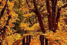 otoño y màs