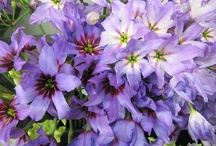 remebering Grandma - buttercups, clematis, floral pictures