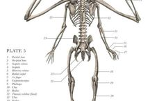 Fantastic skeletons