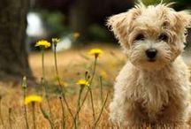 puppy an kitten / by Donna Cannady
