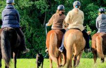 Trust-your-Horse Training | Coaching / Die Grammatik des Reitens™ GELEBT An diesem durchaus anspruchsvollen Weg vom Pferd zum Reitpferd und vom Mensch zum Reiter arbeite ich - in vielfältiger Weise - gerne mit Dir und Deinem Pferd. Von Bodenarbeit bis Reitunterricht.