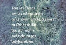 Art Photos Philosophie de Vie et Relations Humains/Chiens.