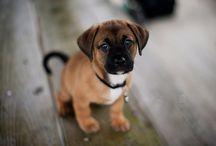 Animal funnies/cuteness