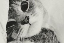 Kitty Miauww / Kitty, kitten, cat, killing, kat, cute, adorable, nuttet, furry