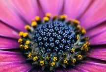 Květy makro