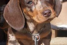 Puppys / Frodo 28.1.2012 Angus 11.9.2014