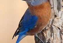 Blue / by Leslie Bennett