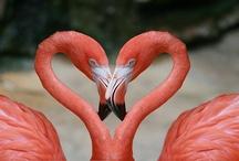 Inspiration - Heart shapes