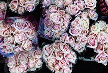 Fleurs et fleurettes / Flowers