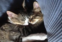 Mis Gatos / Mis gatitos y sus fotillos